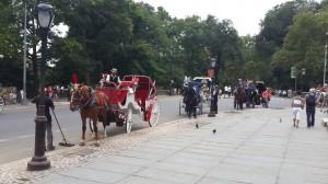 Central Park girişindeki faytonlar