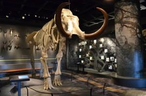Doga Tarihi Müzesi