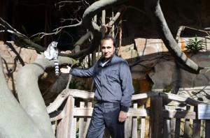 Skansen'de lemurlar arasında