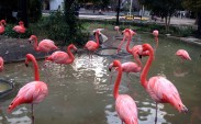Ueno Hayvanat Bahçesi ve kızıl filamingolar