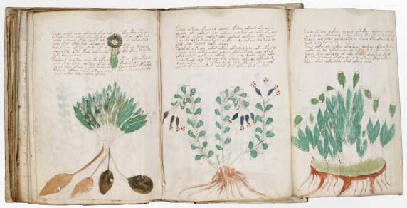 Voynich Yazması