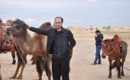 Moğol devesi