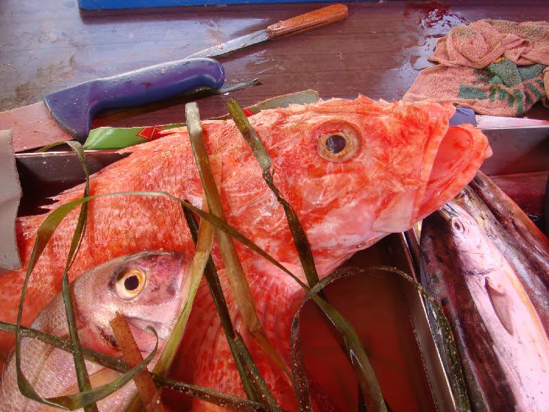 Değişik bir balık