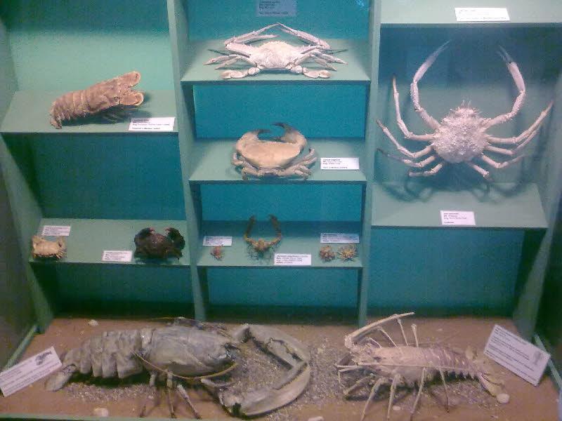 Natural History Museum - Doğa Tarihi Müzesi