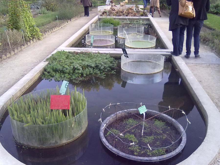 Paris Bitkiler Bahçesi